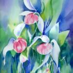 "Showy Ladyslippers 15''  x  19""  Matted"